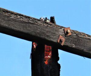 pole fire