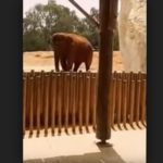 7-Yr-Old Girl dies after elephant throws a stone in Morocco zoo