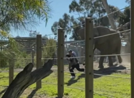 Dad Arrested After Bringing Toddler Into Elephant Habitat For Selfie.