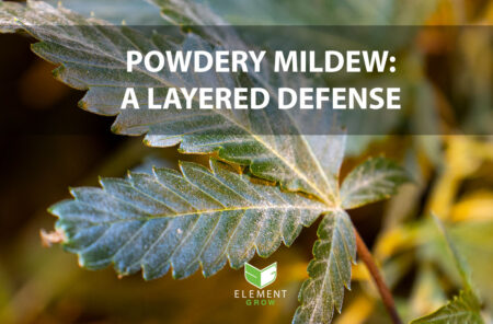 Cannabis leaf with powdery mildew and text that reads Powdery Mildew: A Layered Defense