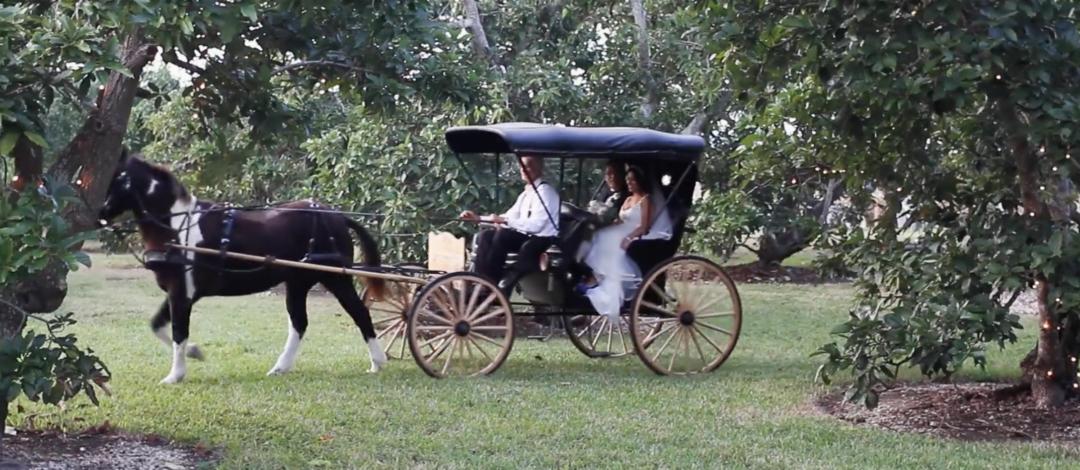 Our Brides Experiences - Sarah & Manuel Garden Wedding