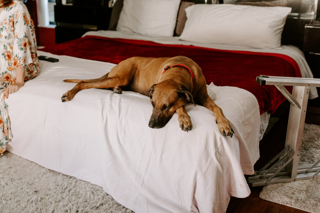 Miami Bohemian Elopement Wedding The Creative's Loft Dog Laying in bed