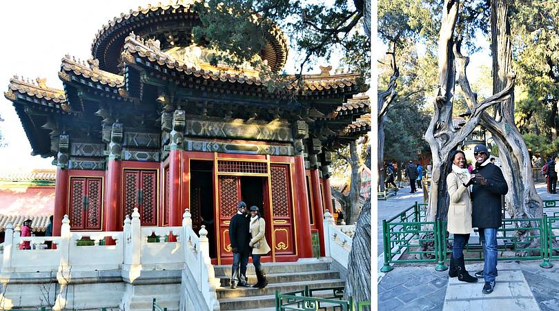 pavillion tree beijing china ps -
