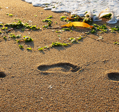 Travel with Mia - Family Fun in Monterey - Sandy Toes