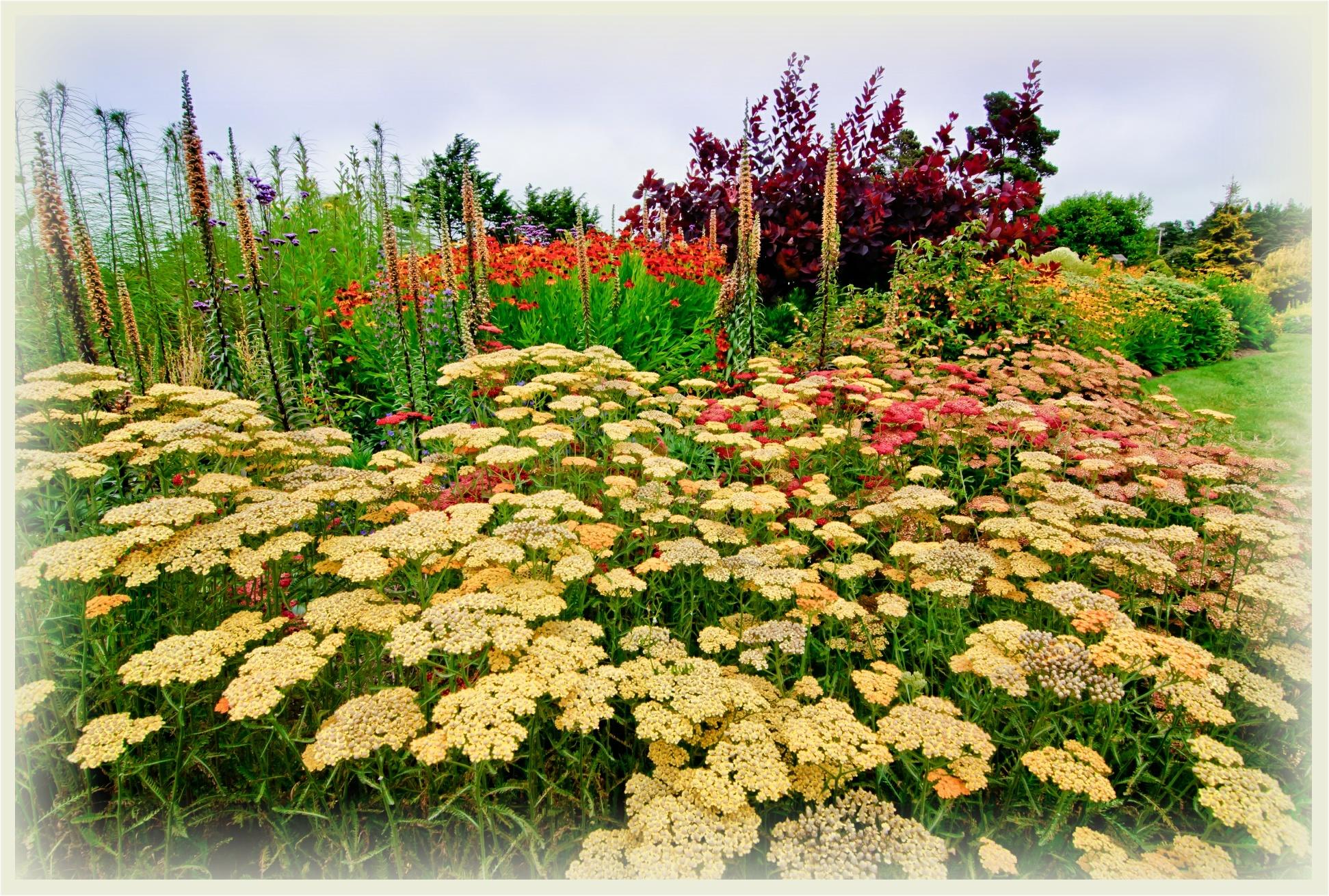 doug-pollard_yellow-flowers_parchment_bkgd_1943x1310