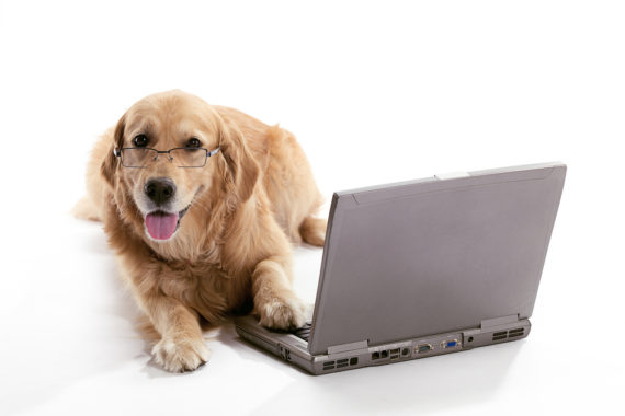 online dog trainers