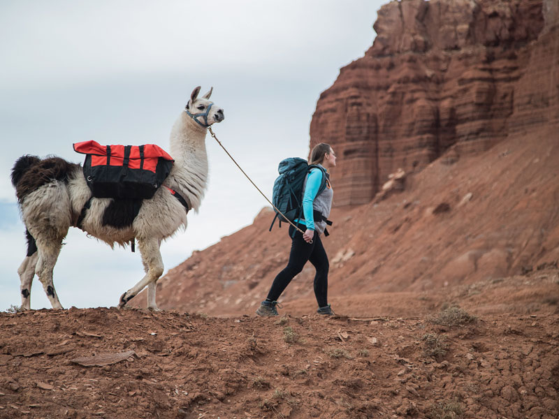 The Traveler - Capital Reef Day Hike