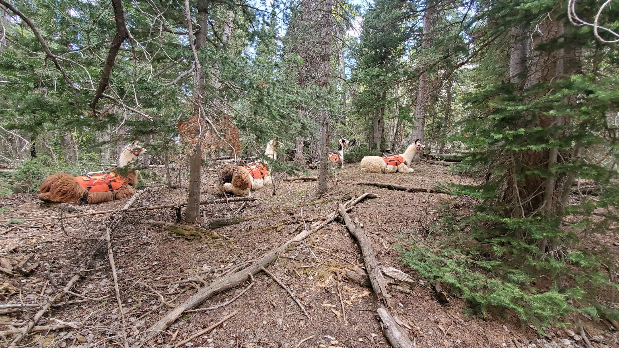 Twin Lakes Hike Utah