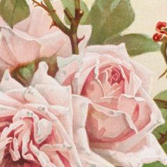 The Curious Love Life of Fabulous Fanny Cradock