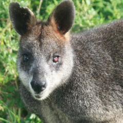 Wildlife of Australia: An Animal Lover's Delight