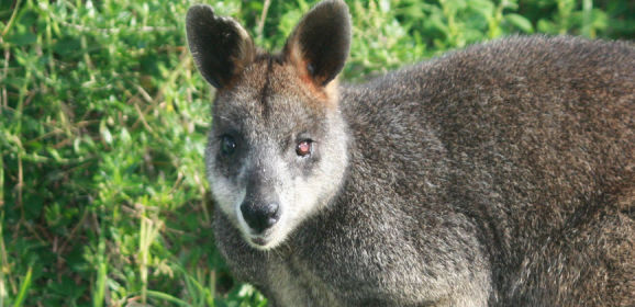 Wildlife of Australia: An Animal Lover's Delight