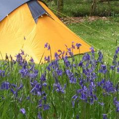 Lifelong Memories of Camping
