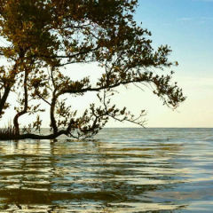 Guy Bradley: Murder in the Everglades