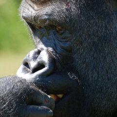 Holidays to Africa: Gorilla Trekking