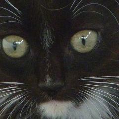 Man pays £10,000 to investigate kitten's murder