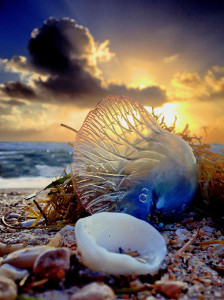 A Man o'War, Adventures Done - winner MPA Wildlife category.