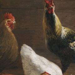 Is Eating Chicken Dangerous?