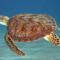 A Sea Turtle's Soliloquy