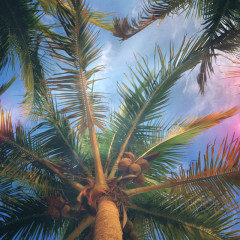 Of Palm Trees and Buried Treasure