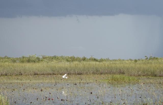 Everglades-MiccosukeeReservation 5