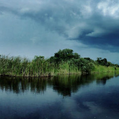 The Battle for the Everglades