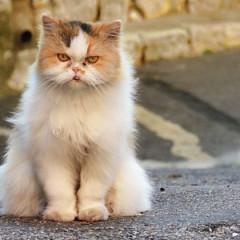 Grumpy Cat – Free Patterns and Tutorial Videos