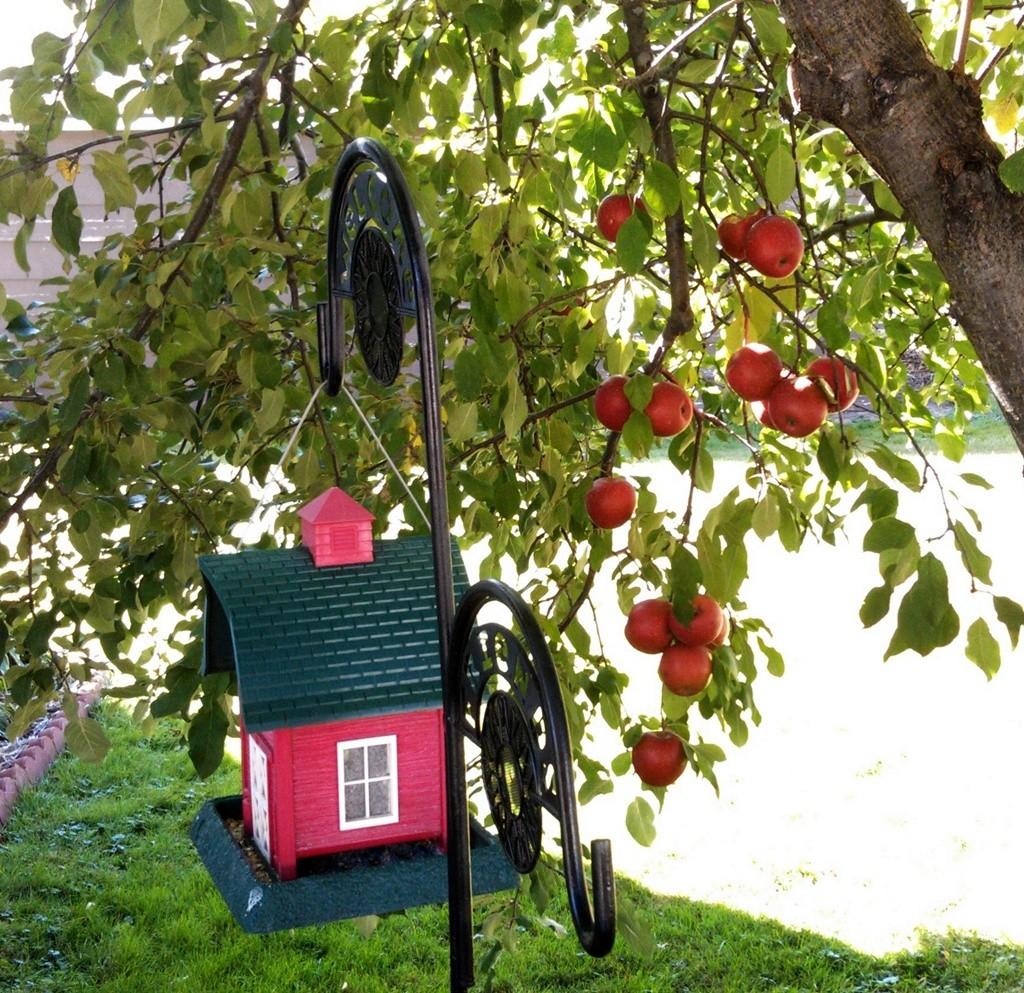 Barn Feeder Apples