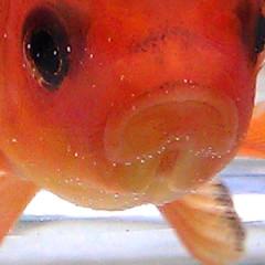 Fishbowl: By Bradley Somer