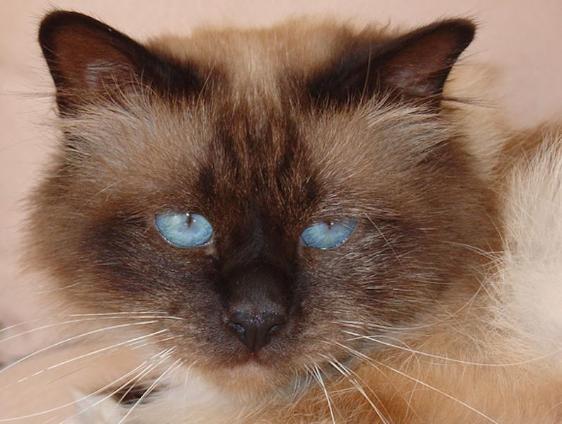 1a.cat
