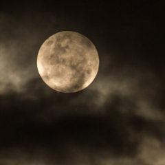 Bitter Moon, by Alexandra Sokoloff