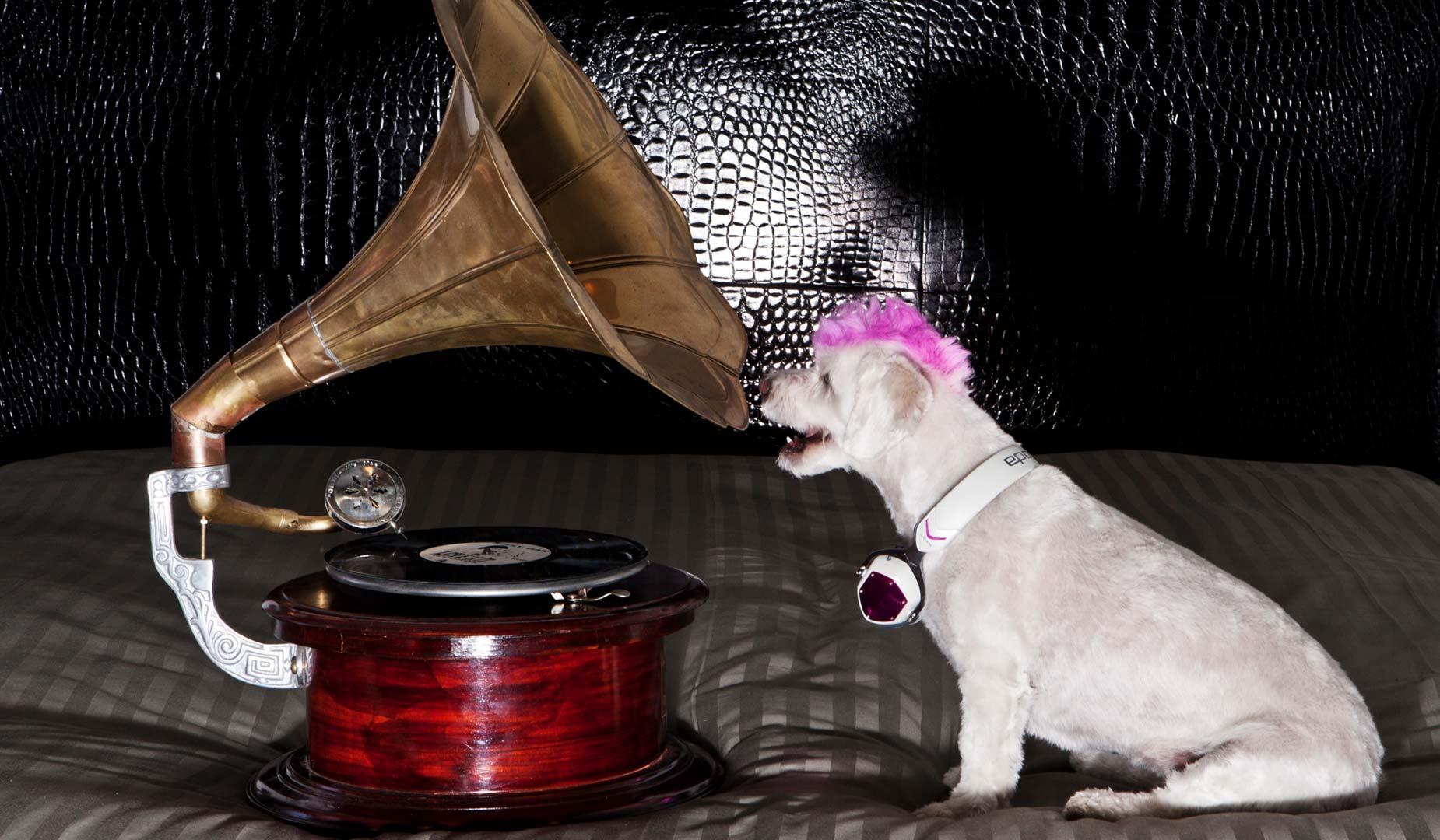 RCA Punk Dog