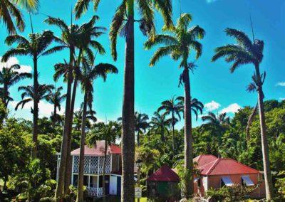Palms of Nevis