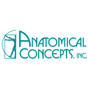 Anatomical Concepts client