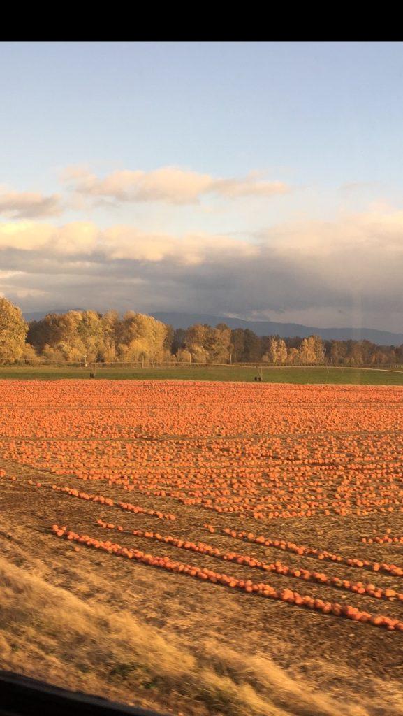 A pumpkin patch in Oregon