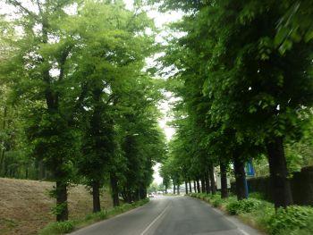 italiainpiega-pieghe-meravigliose-itinerari-moto-pianura-padana-ville palladiane-colli euganei 2