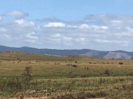 Venezuelanos usam caminhos alternativos para chegar ao Brasil durante o período de fechamento de fronteira