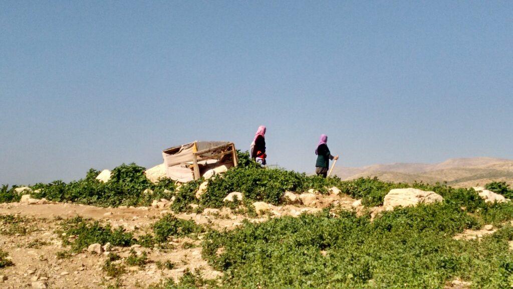 Camponeses palestinos no Vale do Jordão, área C da Cisjordânia, ocupada por Israel.