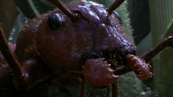 Honey I Shrunk the Kids 1989 Movie