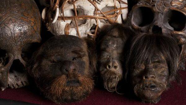 Pygmy Shrunken Heads