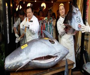 World's Most Expensive Edible Fish Sale