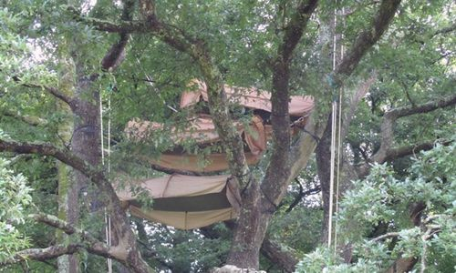 mighty oak tree top camping