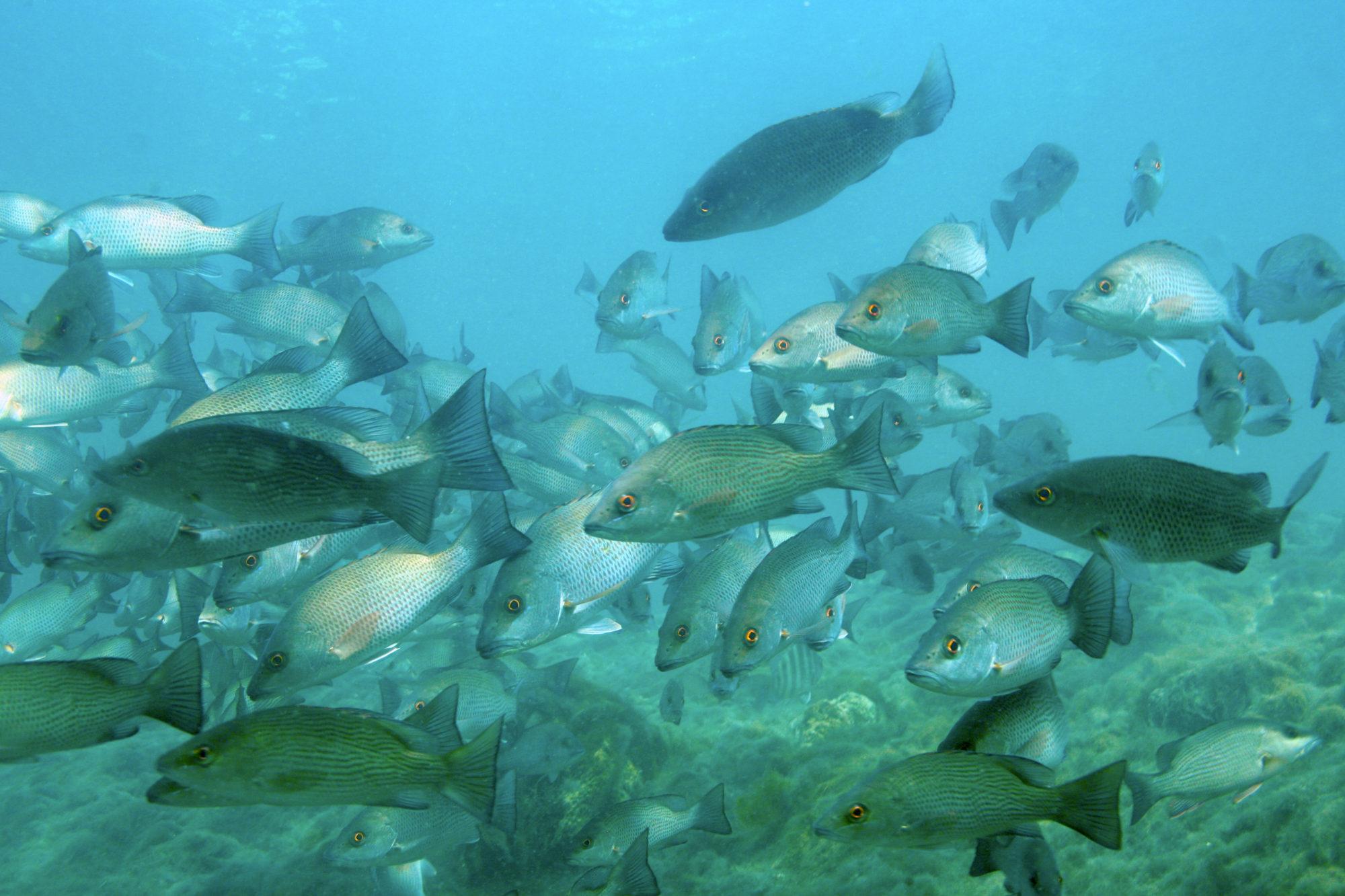 Hunter Springs Fish