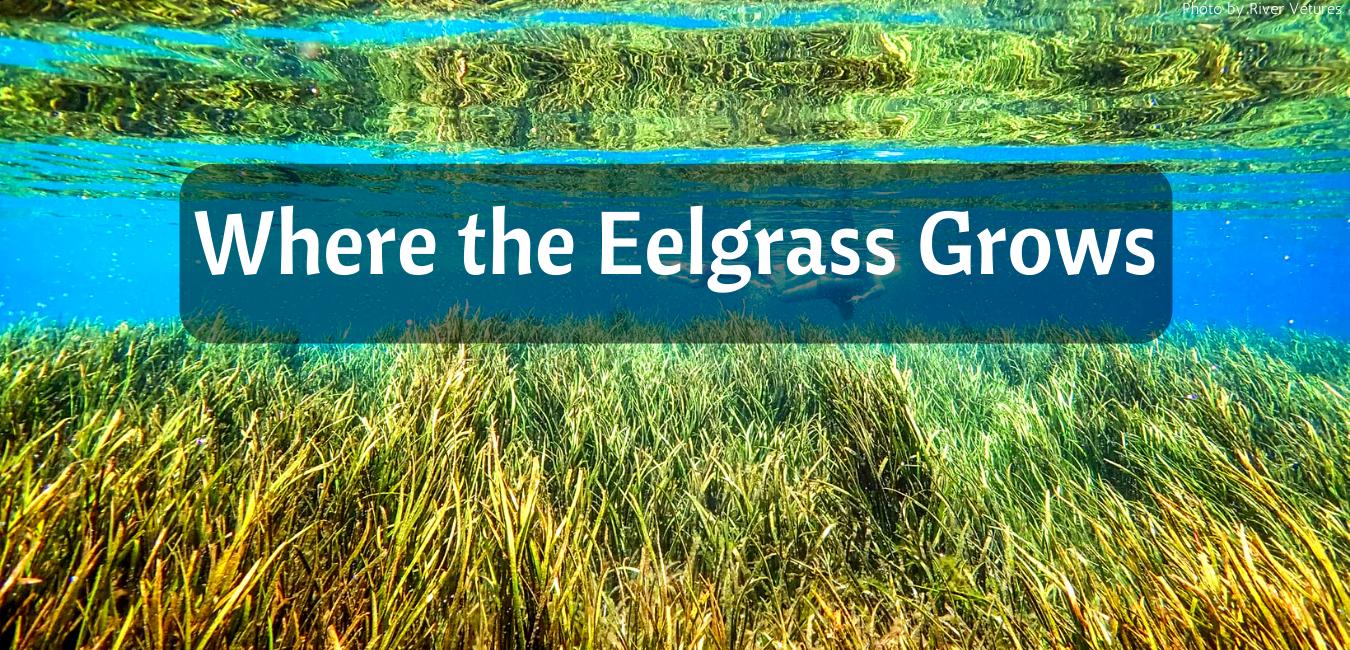 Where the Eelgrass Grows