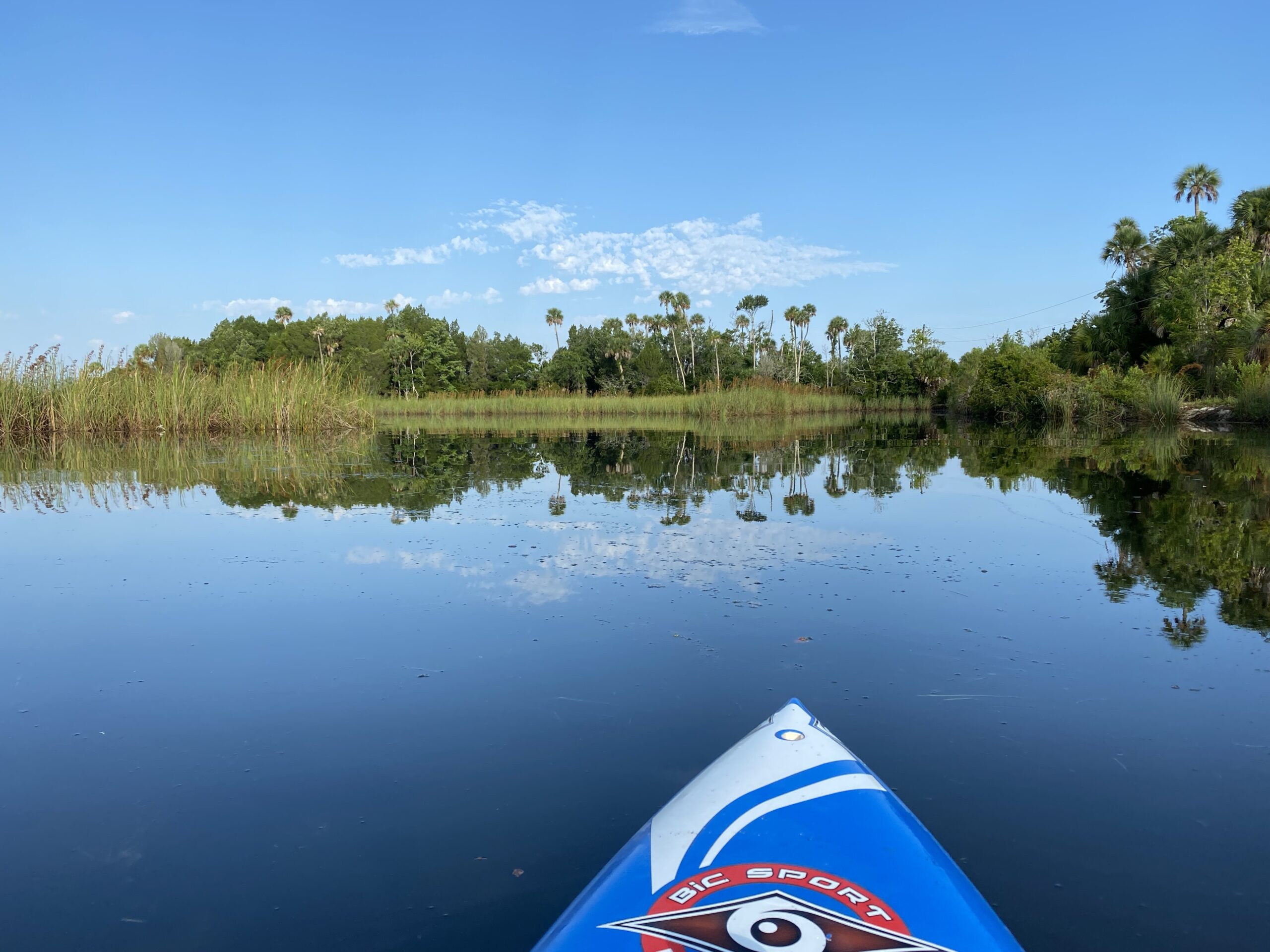 A picture taken on a paddle board overlooking a sawgrass prairie