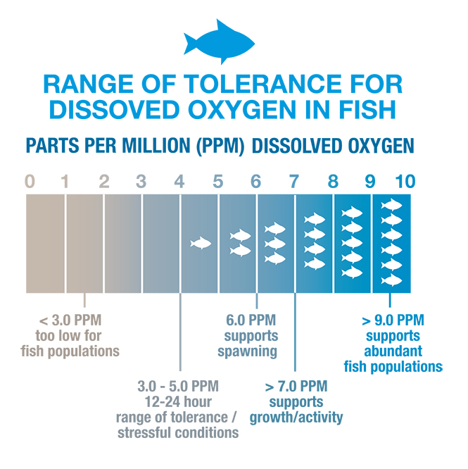 A chart displaying how the increased amount of dissolved oxygen supports more aquatic life