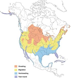 This map on Walker on the Water shows where cormorants live in the United States.