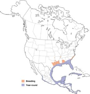 This map on Walker on the Water shows where anhingas live in the United States.