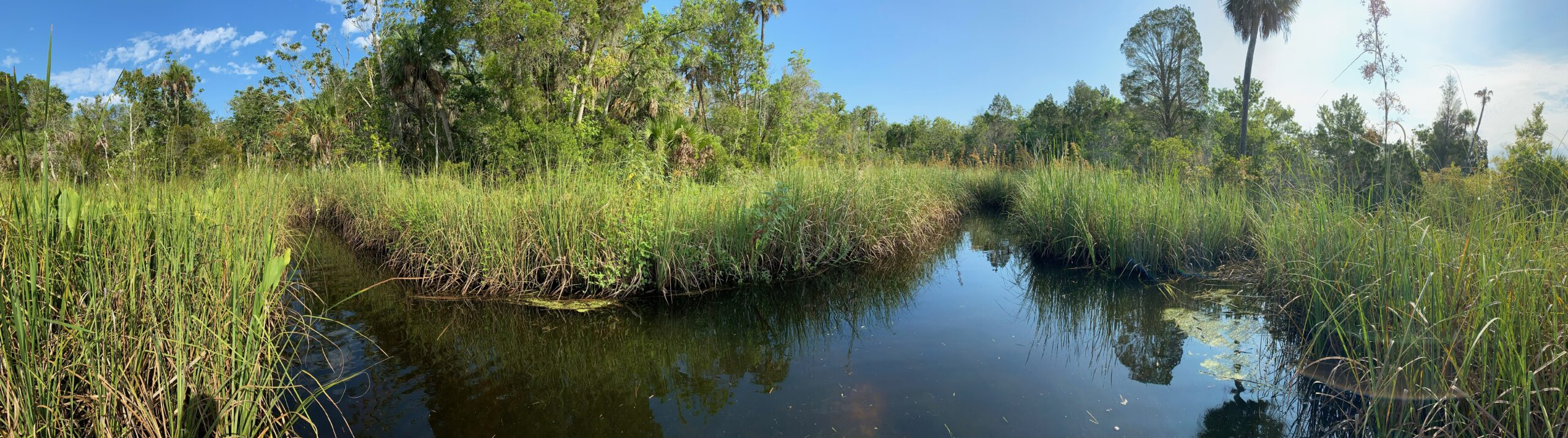 This image shows a panorama Walker Willis took of different pathways through the sawgrasses
