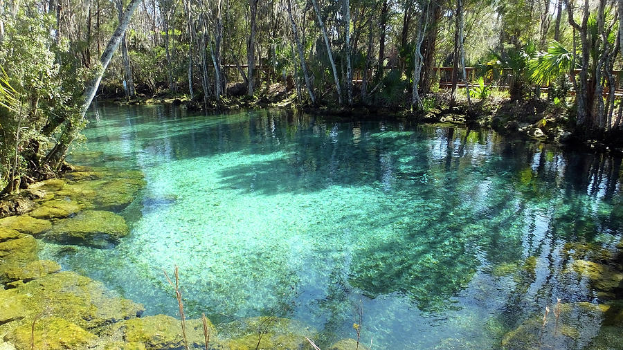 This image displays Three Sisters Springs as discussed in the Walker on the Water post. The spring is a vibrant blue.