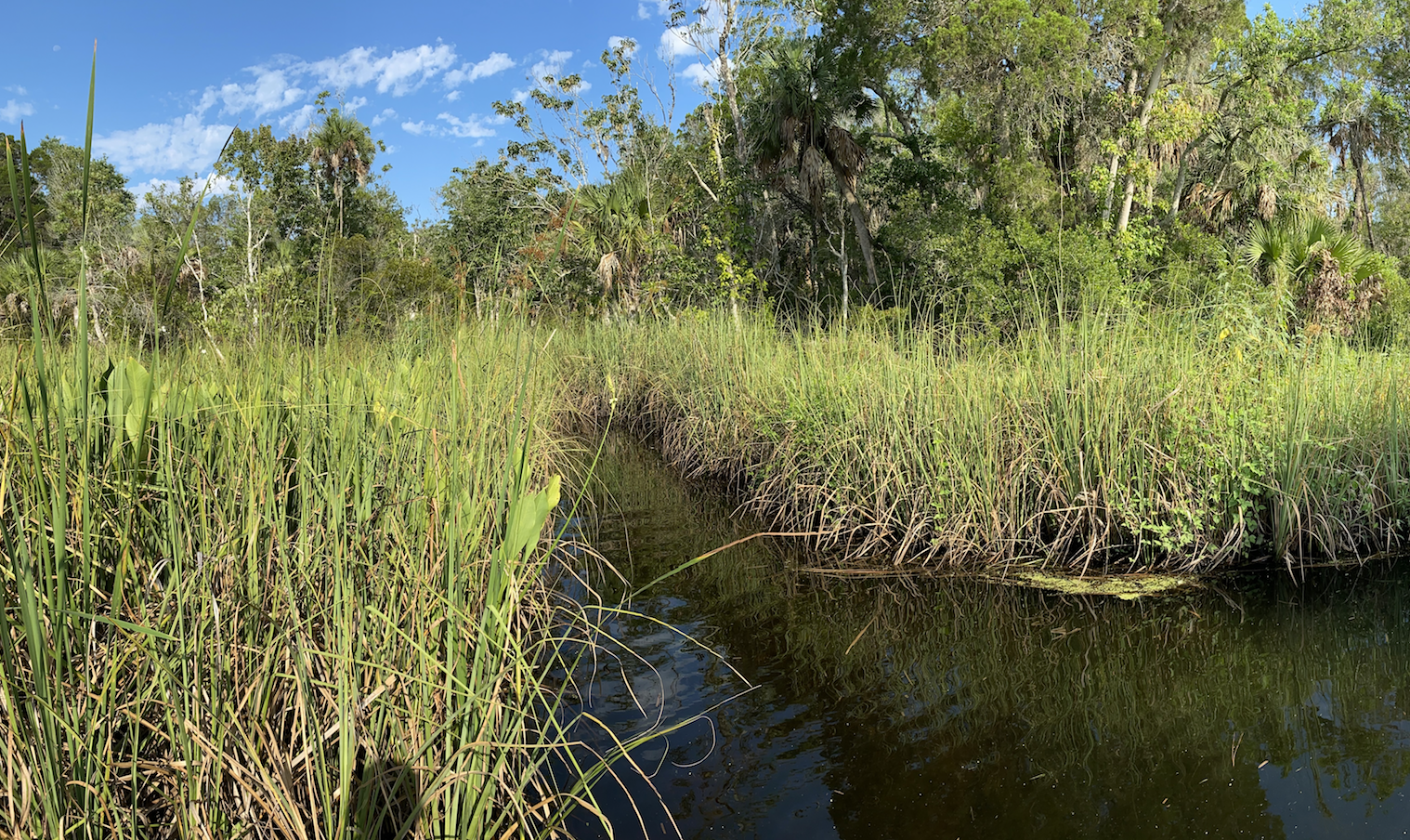 This image on Walker on the Water depicts a sawgrass prairie where snakes and Alligators might live.
